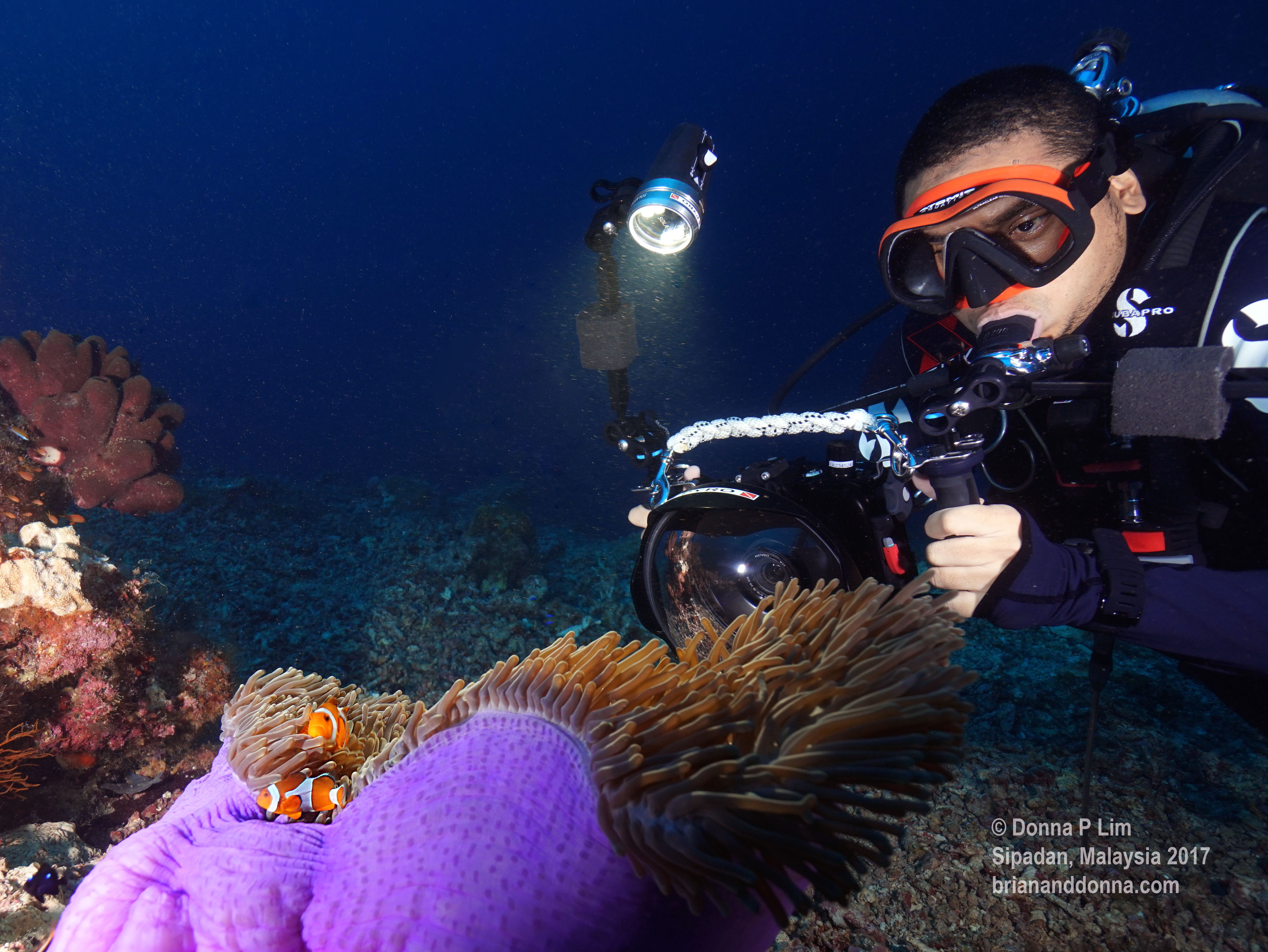 blog clownfish with brian