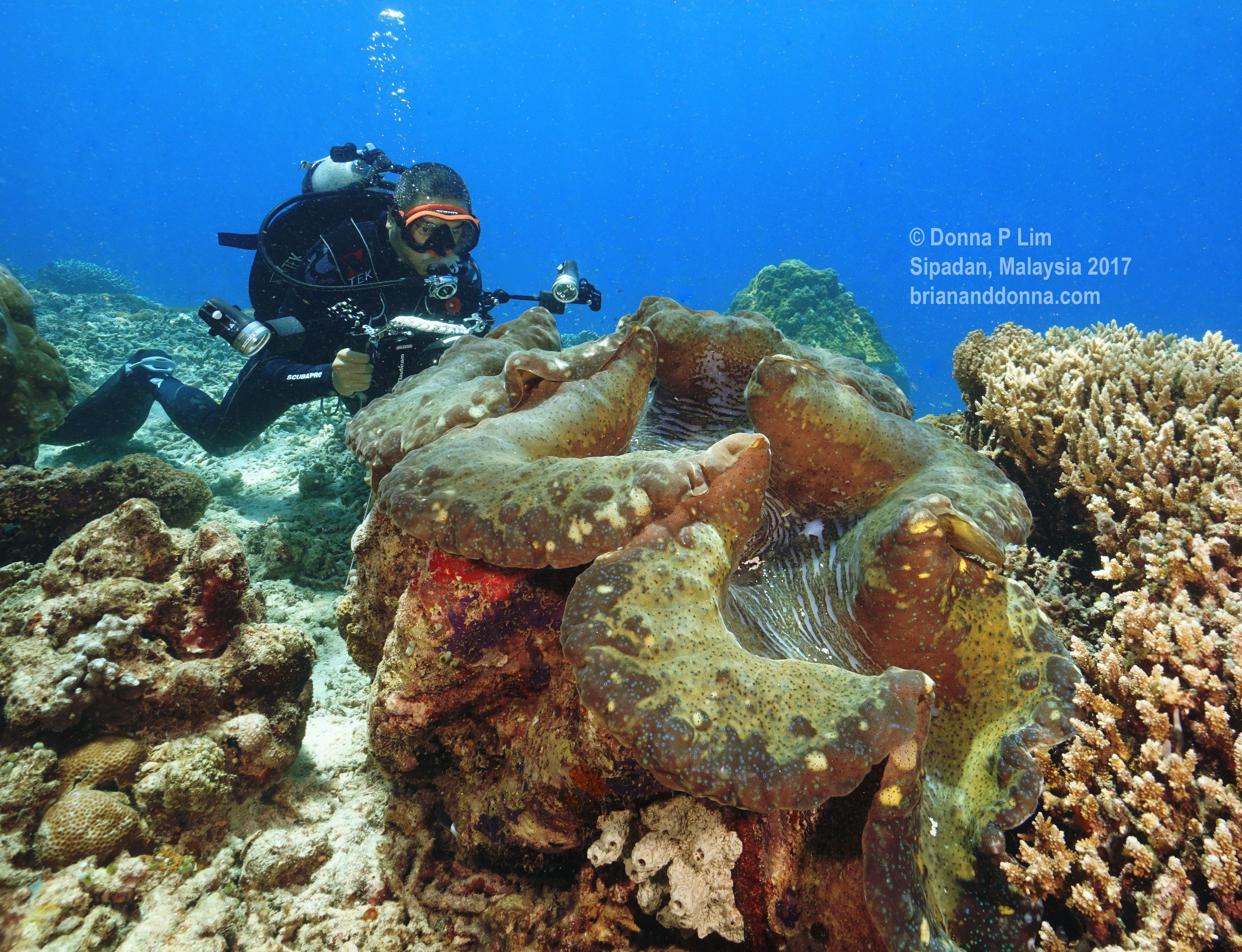 blog edited- giant clam