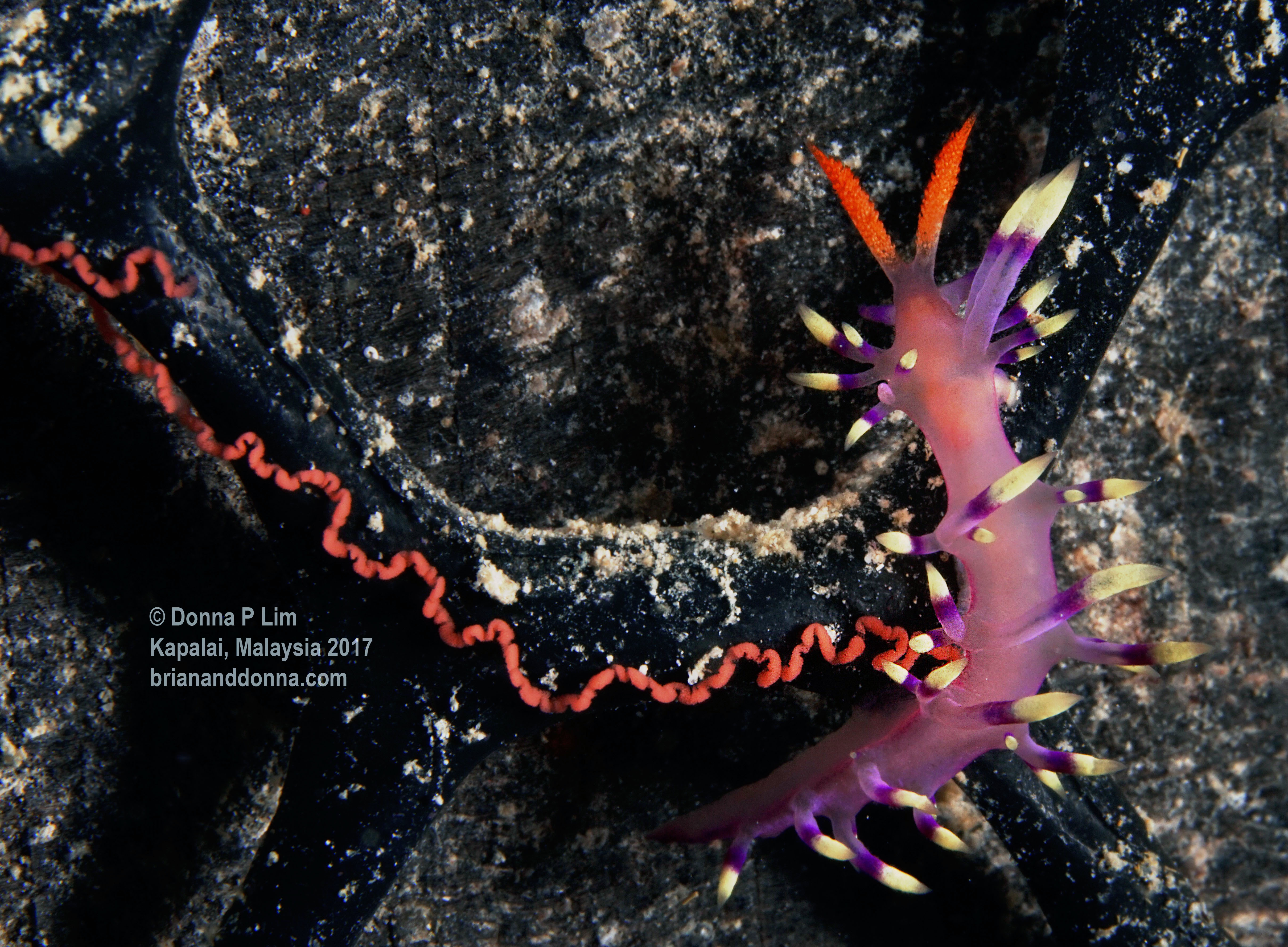 blog edited- nudibranch with eggs