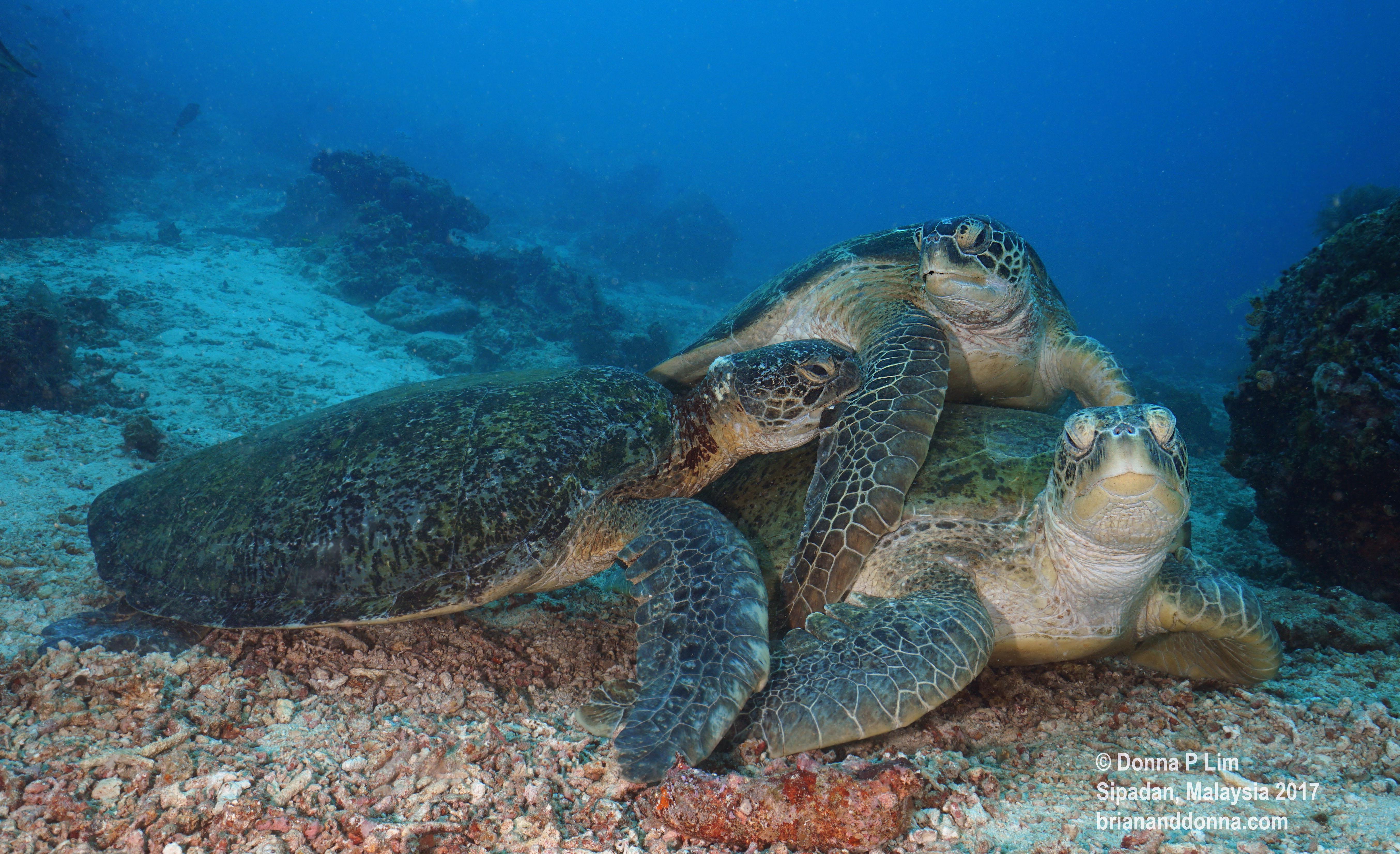 blog edited- turtles 3