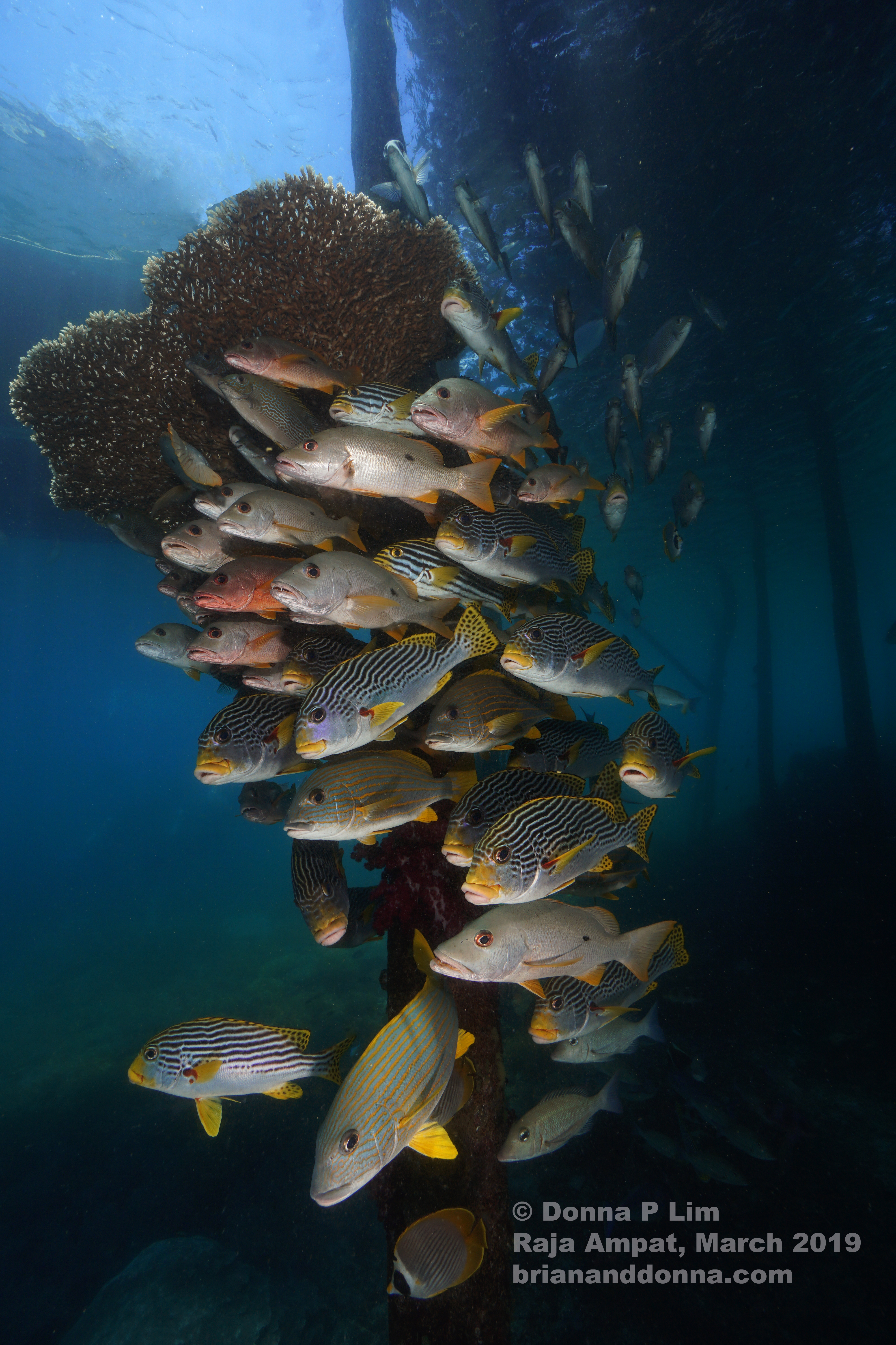 fish in jetty